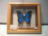 Go to Imported Framed Butterflies